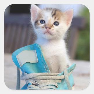 Kitten In Blue Shoe Square Sticker