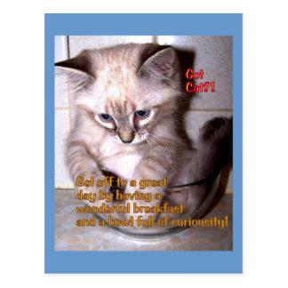Kitten in Bowl CARD