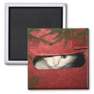 Kitten in Christmas box Refrigerator Magnets