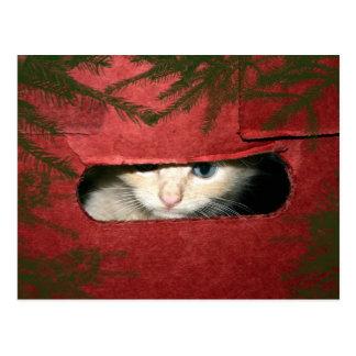 Kitten in Christmas box Postcard