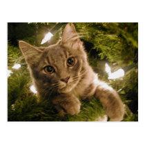 Kitten in Christmas Tree - Customizable Postcard