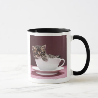 Kitten in cup and saucer