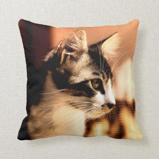 Kitten in dappled sunlight pillow