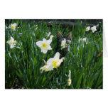 KITTEN IN FLOWERS GREETING CARD
