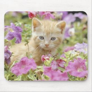 Kitten in flowers mouse pad