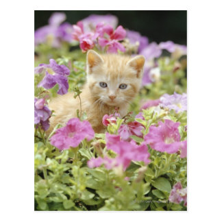 Kitten in flowers postcard