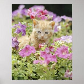 Kitten in flowers poster