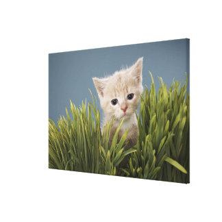 Kitten in grass canvas print