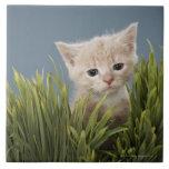 Kitten in grass ceramic tiles