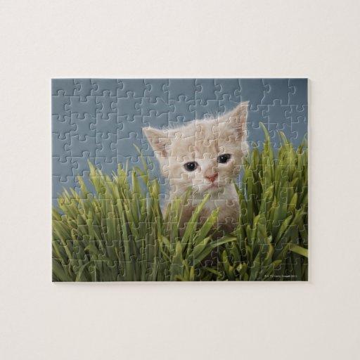 Kitten in grass puzzle