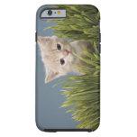 Kitten in grass tough iPhone 6 case