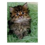 Kitten In Green Yarn Post Cards