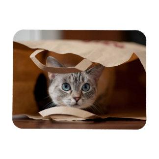 Kitten in Grocery Bag Magnet
