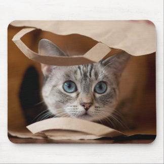 Kitten in Grocery Bag Mouse Pad