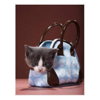 Kitten in handbag postcard