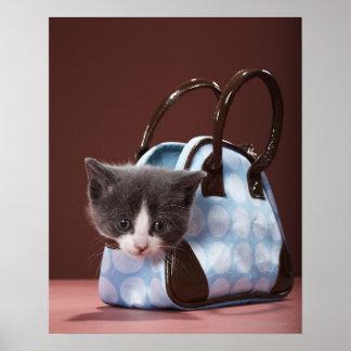 Kitten in handbag poster