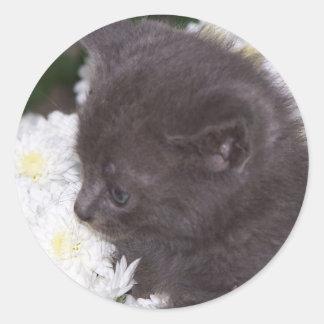 kitten in mums classic round sticker