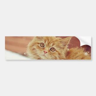 Kitten in Snow Car Bumper Sticker