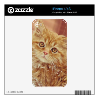 Kitten in Snow Decals For iPhone 4S