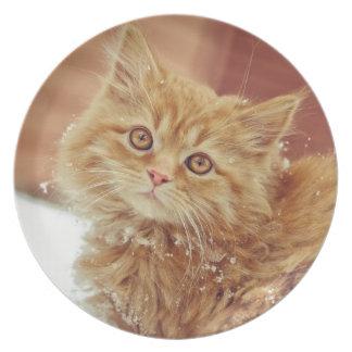 Kitten in Snow Dinner Plate