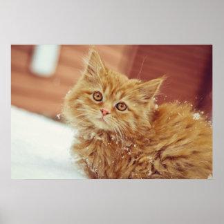 Kitten in Snow Poster