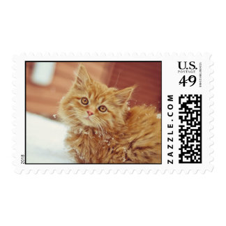 Kitten in Snow Stamps