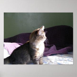 Kitten in the Attic Print