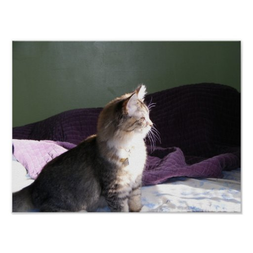 Kitten in the Attic Poster