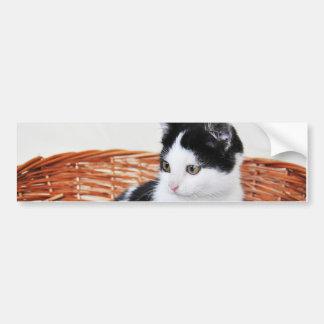 Kitten in the basket bumper sticker
