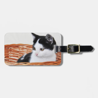 Kitten in the basket luggage tag