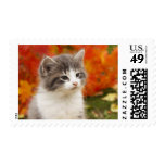 Kitten In The Fall Postage