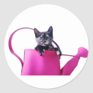 Kitten in the pink watering classic round sticker