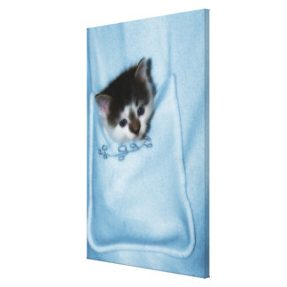 Kitten in the Pocket Canvas Print