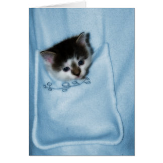 Kitten in the Pocket Card