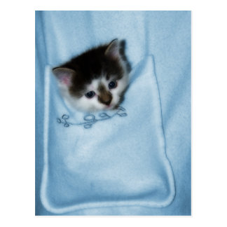 Kitten in the Pocket Postcard