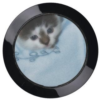 Kitten in the Pocket USB Charging Station