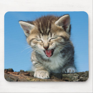 Kitten In Tree Mouse Pad