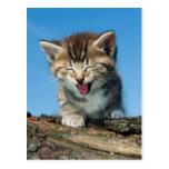 Kitten In Tree Postcard