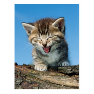 Kitten In Tree Postcard