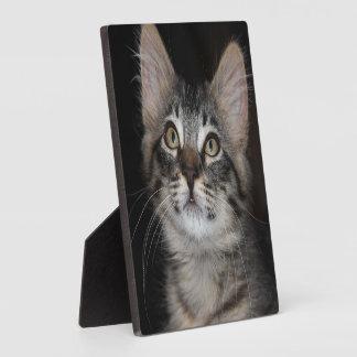 Kitten Innocence Photo Plaque