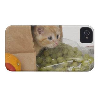 Kitten inside grocery bag iPhone 4 cover