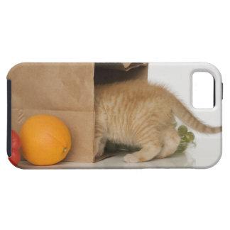 Kitten inside grocery bag iPhone SE/5/5s case