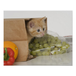 Kitten inside grocery bag posters
