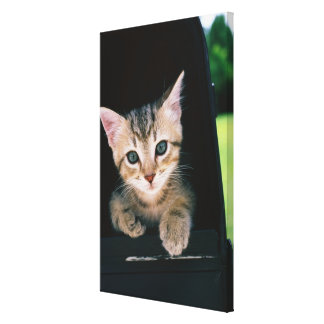 Kitten inside of mailbox gallery wrapped canvas