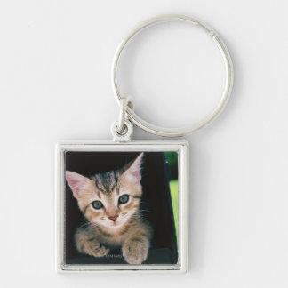 Kitten inside of mailbox key chain
