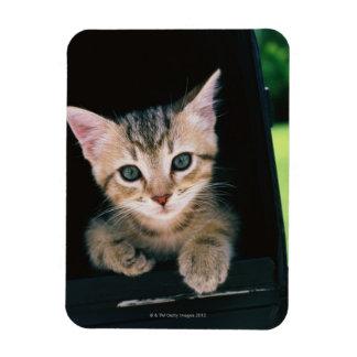 Kitten inside of mailbox magnet
