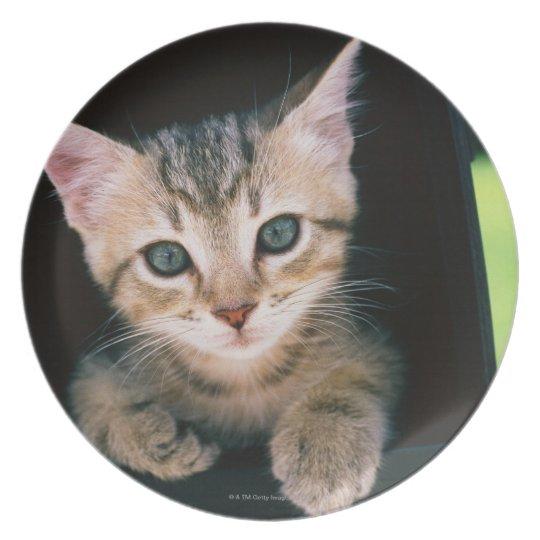 Kitten inside of mailbox plate