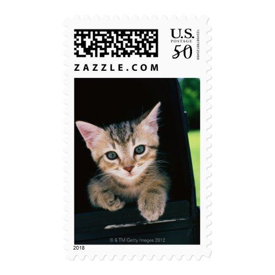 Kitten inside of mailbox postage