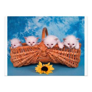 kitten custom invitations
