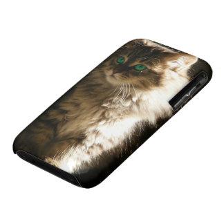 Kitten iPhone 3 Cases